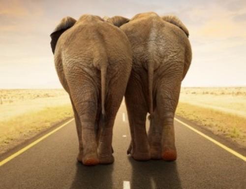 Elefantenrennen – wenn Lkws zum Überholen ansetzen